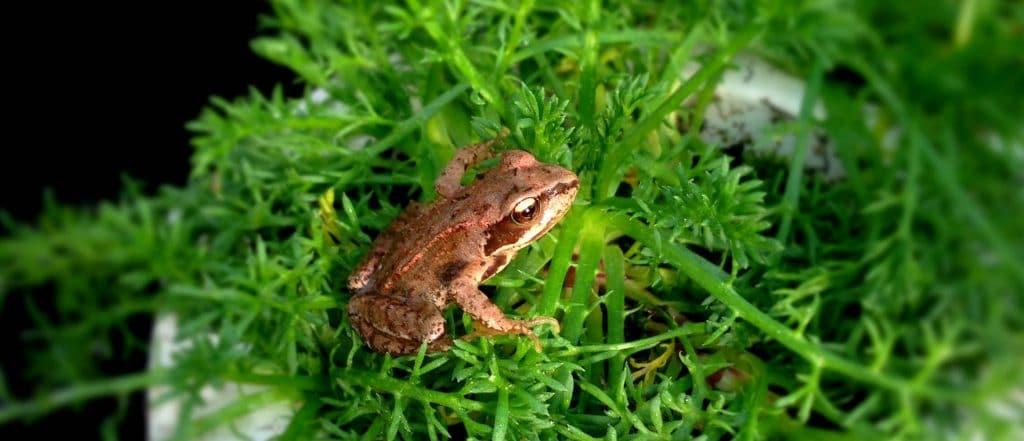 slide-frosch