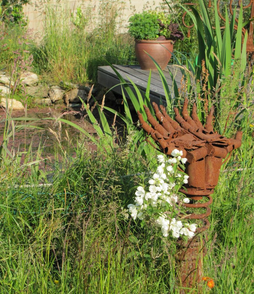 pond-herbs-01