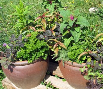potted-herbs01