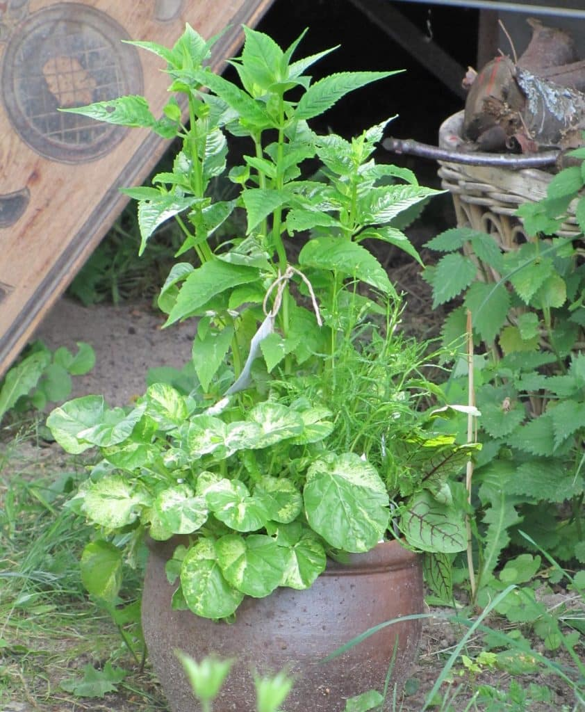 potted-herbs03