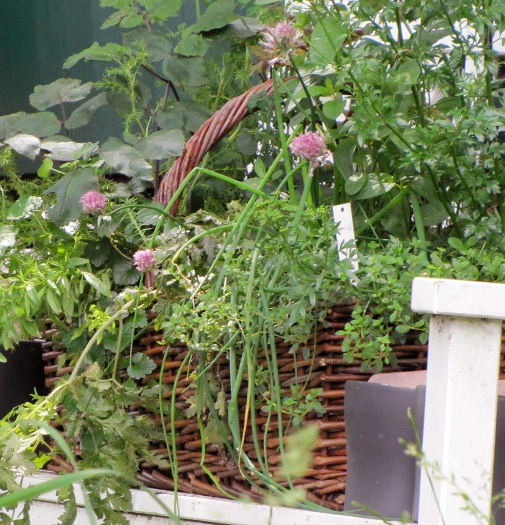 stuhl-herbs01